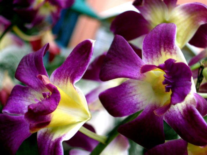 purple_tropical_flower.jpg