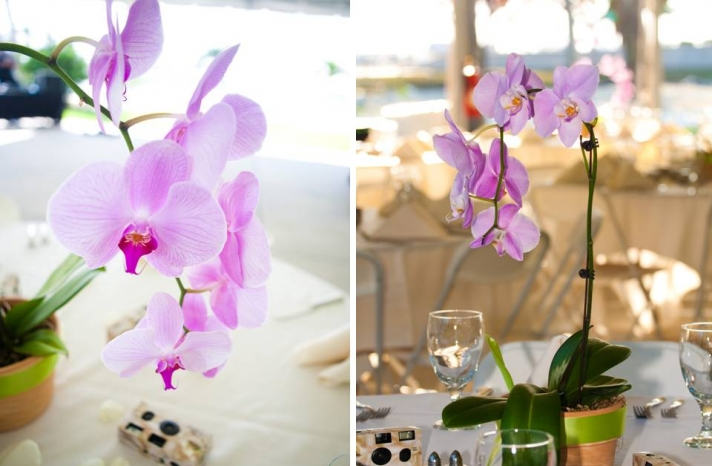 outdoor-florida-wedding-reception-decor-orchids-for-wedding-flowers-centerpieces