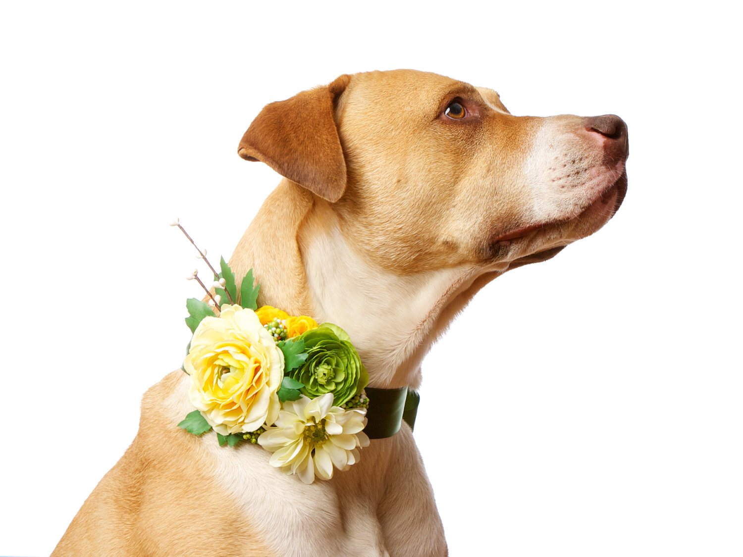 dogs in flower crowns flower crowns crown and dog