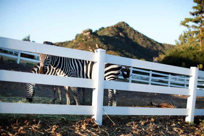 wild animals at real weddings California outdoor wedding