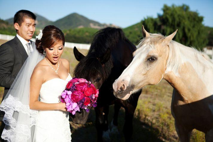 bride groom get friendly with horses california wedding