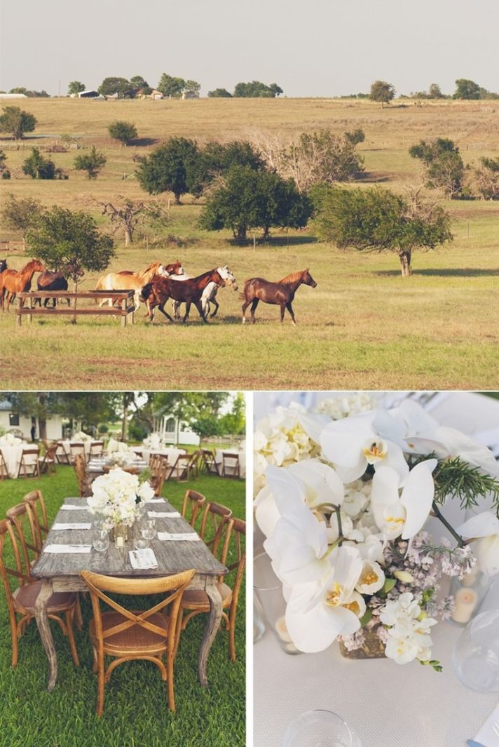 rustic farm wedding texas wedding photographers wild horses elegant ...