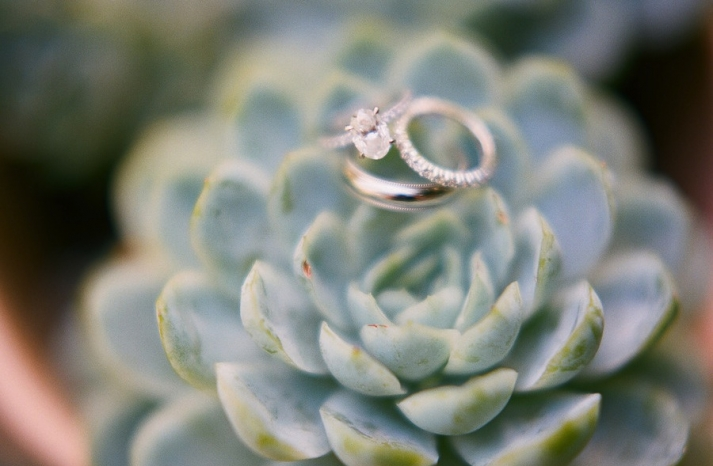oval cut engagement ring succulent backdrop