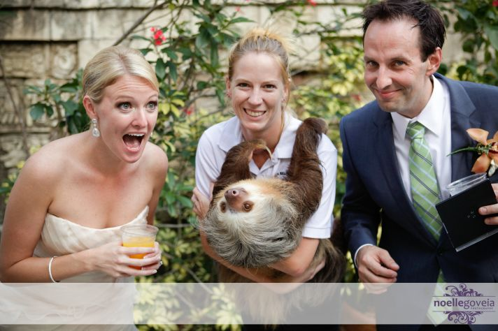 how to get the perfect wedding photo ditch the animals
