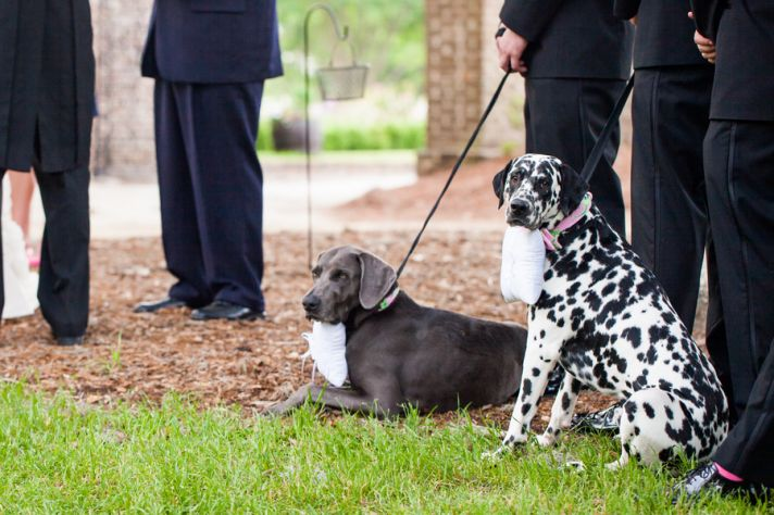 Double trouble wedding ring bearer dogs