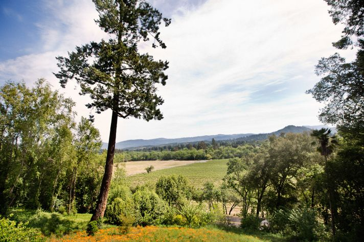 Wine country wedding vista